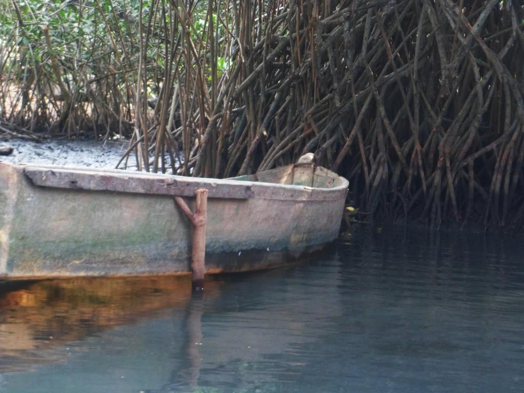 Mangrove Boat Tour, El Paredon Guatemala