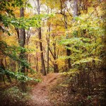 Brown County State Park | Best Indiana Hiking Trails